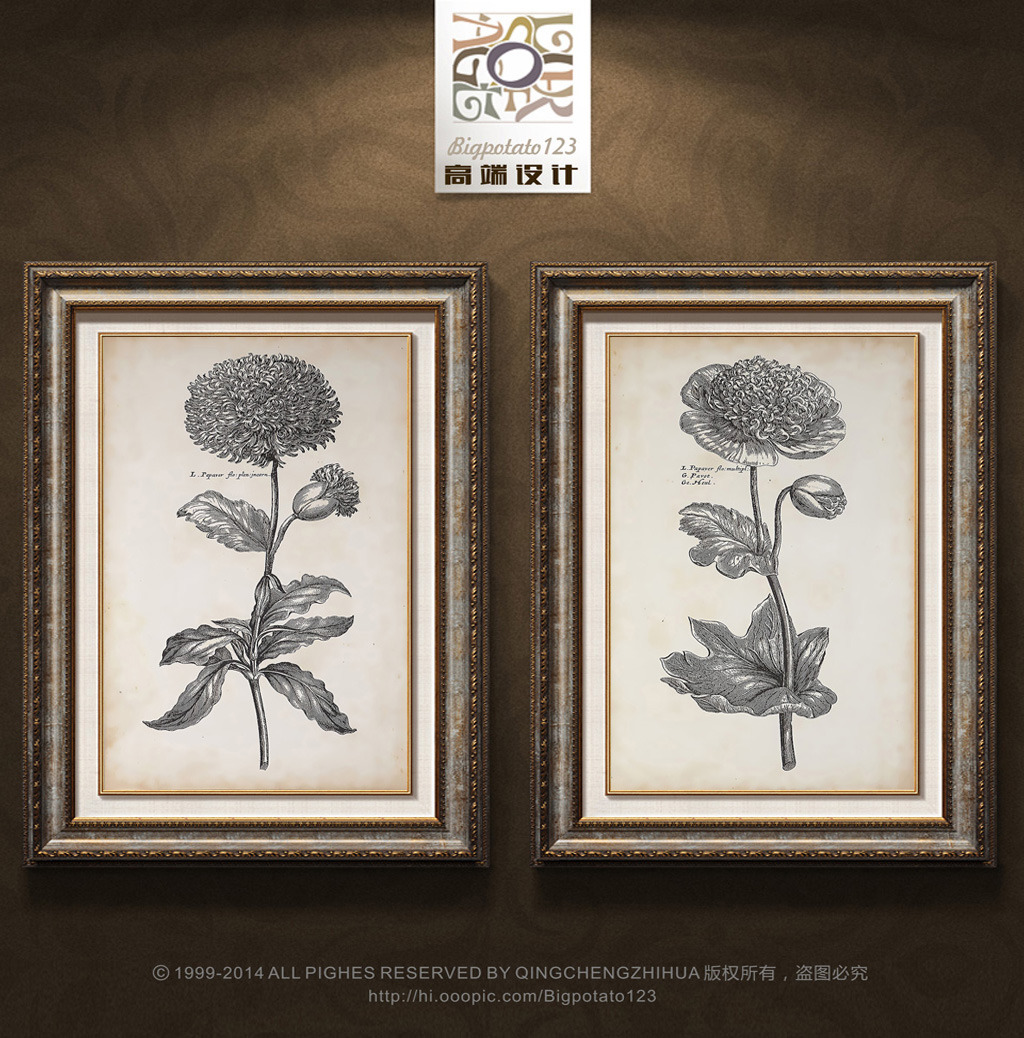 高档黑白花卉植物图谱装饰画