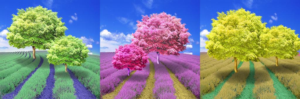 风景树画高清图片下载(图片编号12508740)风景无框画