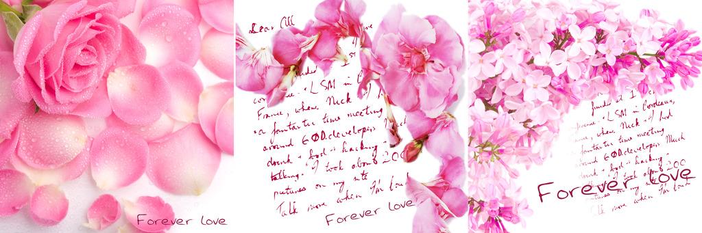 喷绘玫瑰花背景图
