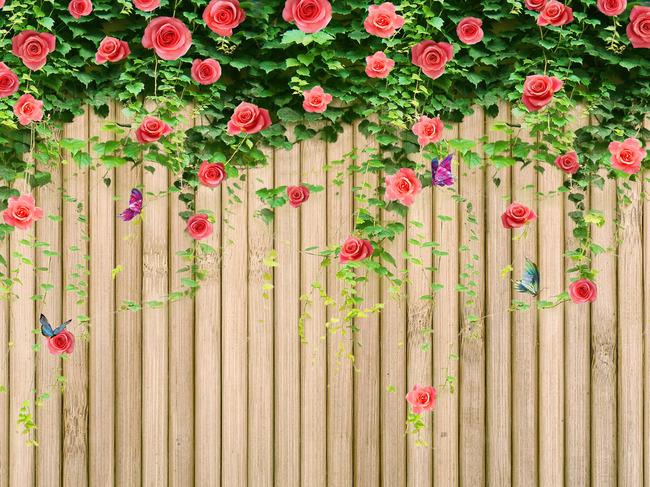 蔷薇花 藤蔓