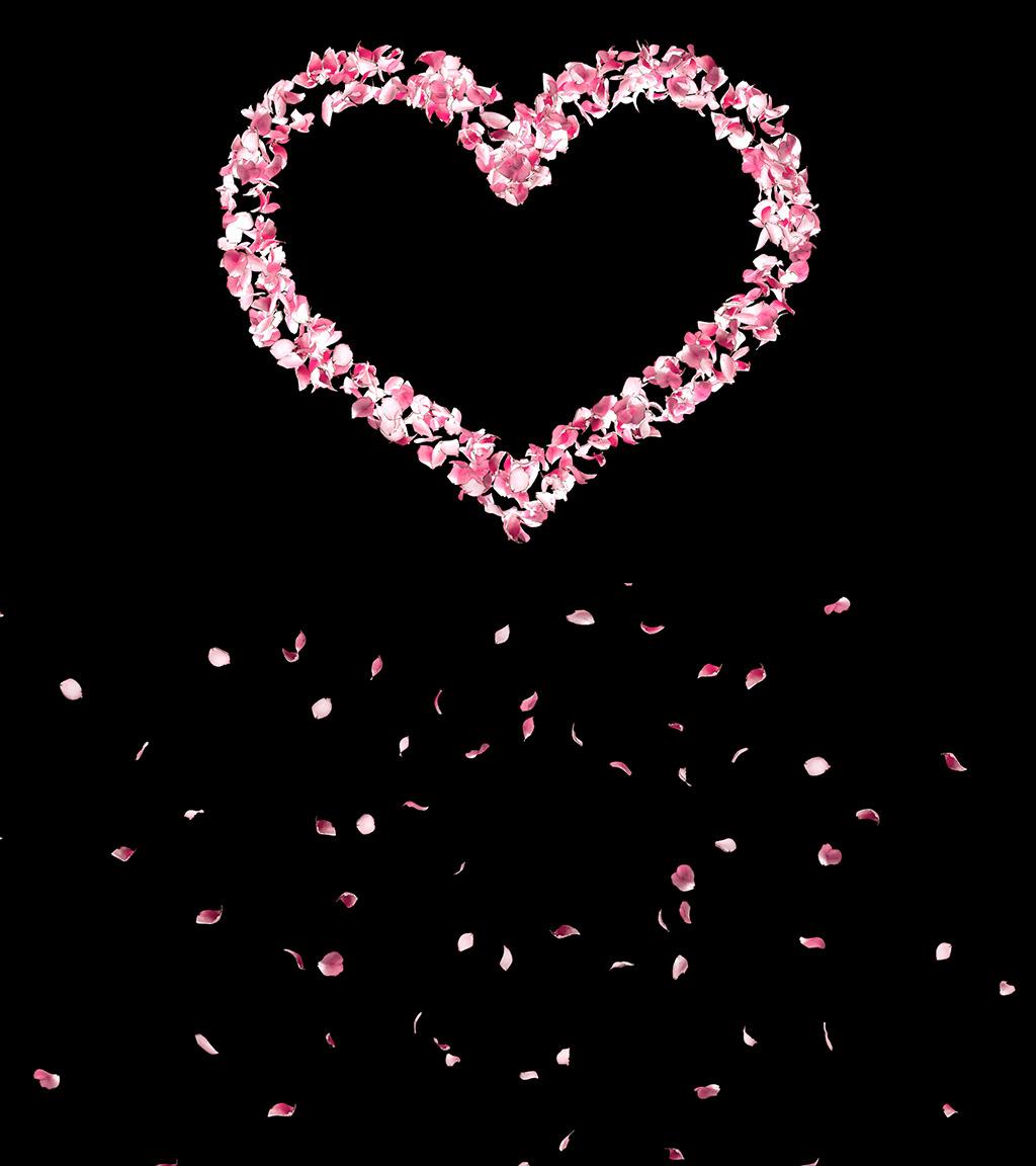 2组玫瑰花瓣心形视频模板(带透明通道)图片