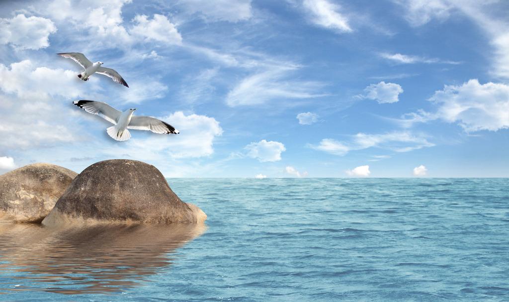 电视背景墙大海海鸥