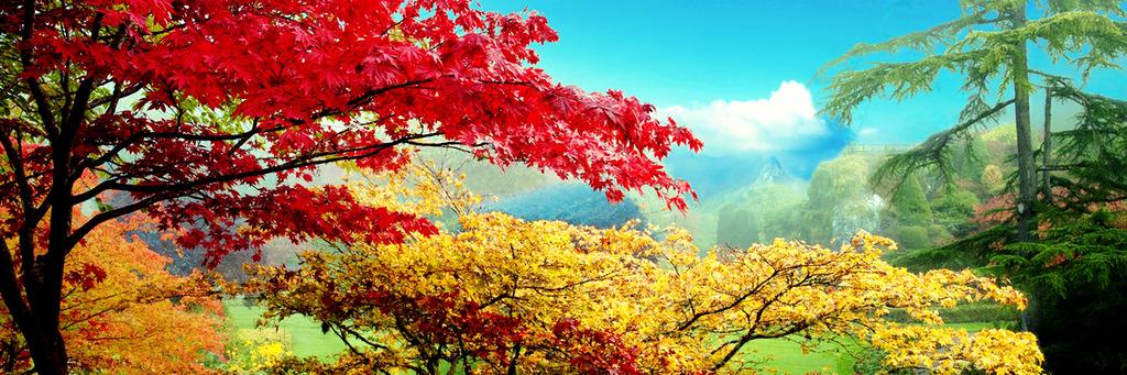 背景墙|装饰画 油画 风景油画 > 大型枫树林黄山风景油画  原创正版
