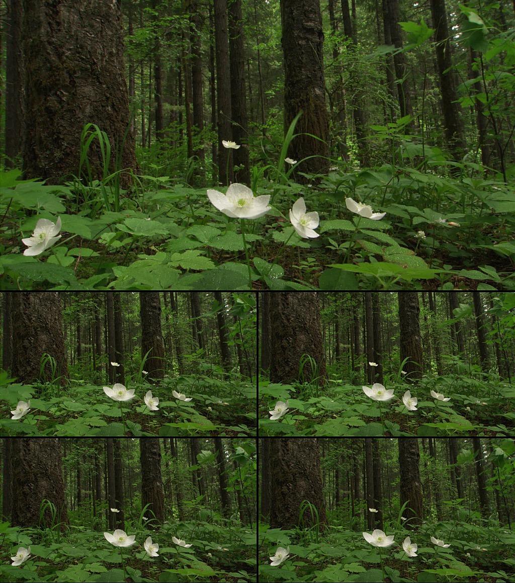 实拍森林野花荷花视频背景素材