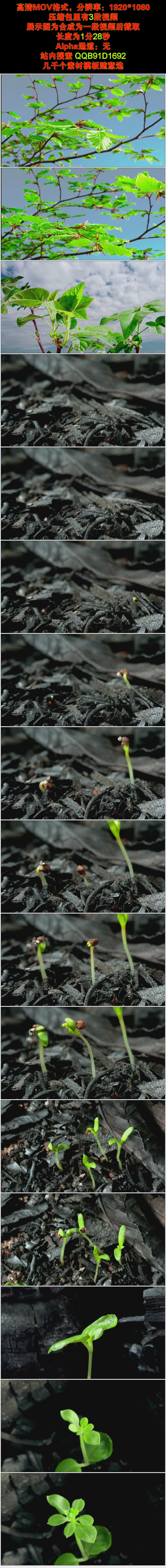 树枝树芽发芽生长春天春季高清实拍视频素材