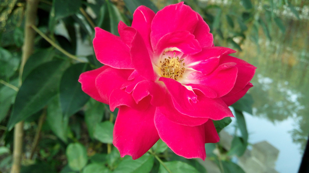 绿叶红花模板下载 绿叶红花图片下载