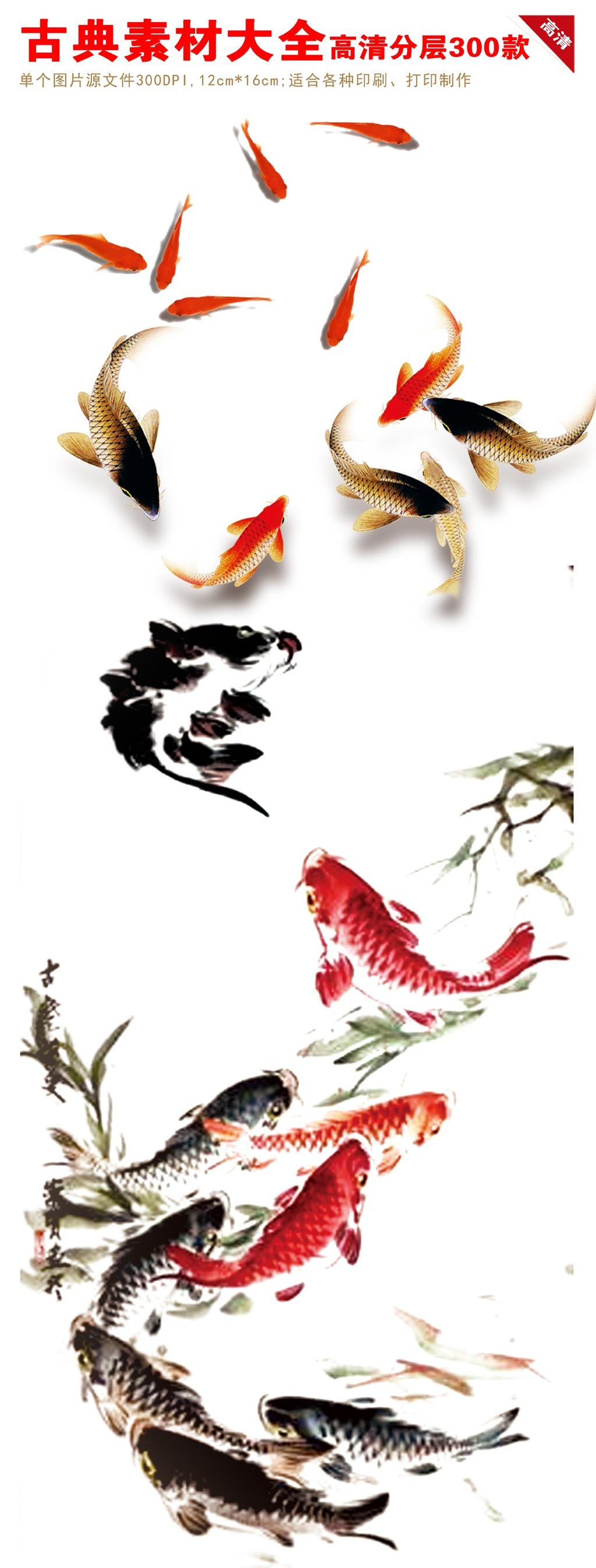 鱼素材 鲤鱼荷花图