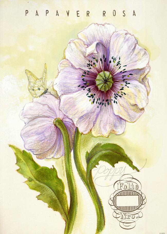 植物花卉欧美欧式简欧复古怀旧画芯图片下载