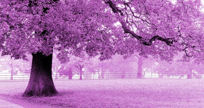 粉色樱花壁纸卡通