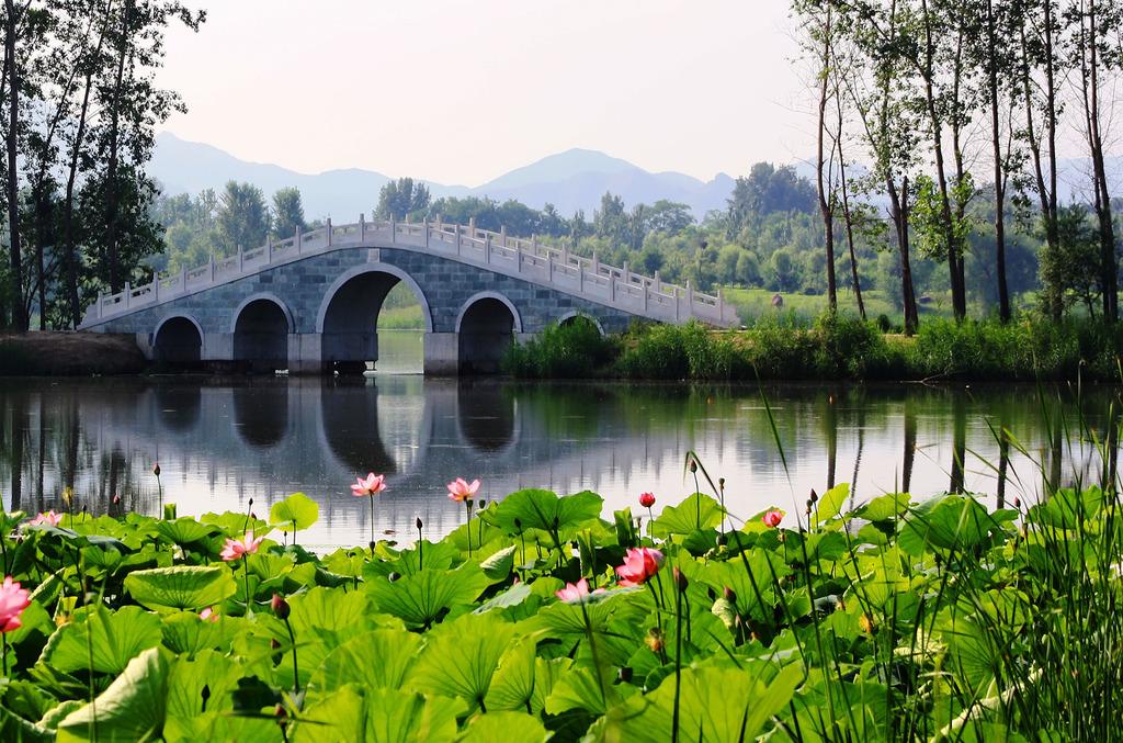 荷花池和石拱桥摄影图模板下载 荷花池和石拱桥摄影图图片下载 荷花池