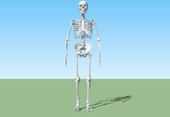 骨架模型模板下载(图片编号:12826246)