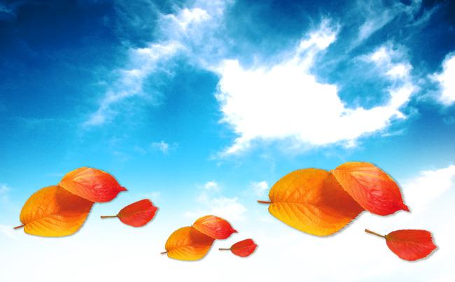 现代唯美天空树叶背景墙高清大图素材模版