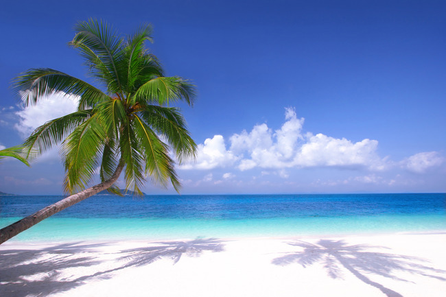 现代清新开阔海景椰子树海滩风景图高清大图高清图片