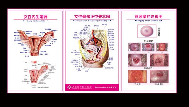 女性生殖展板模板下载