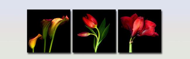 郁金香花瓶的简笔画展示_康之园