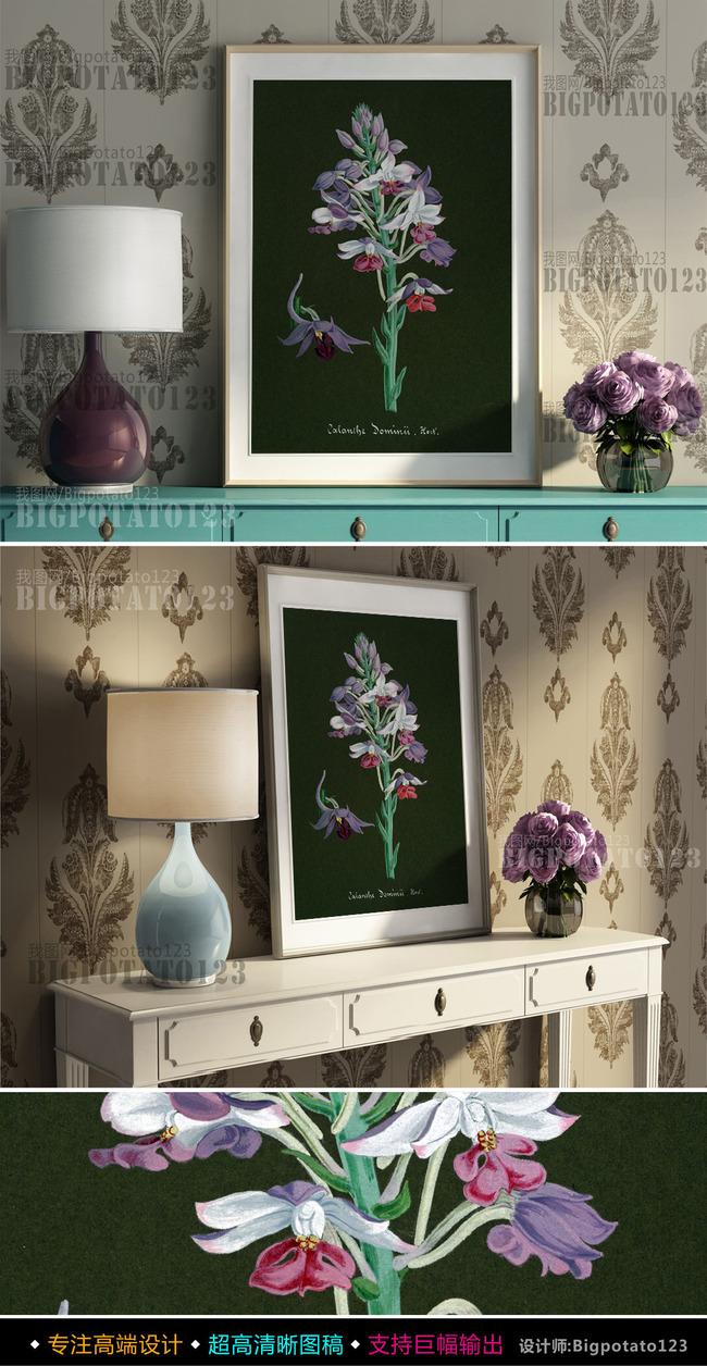 手绘兰花 手绘植物 兰花圣经 手绘植物图谱 手绘植物 水粉花卉 百草集