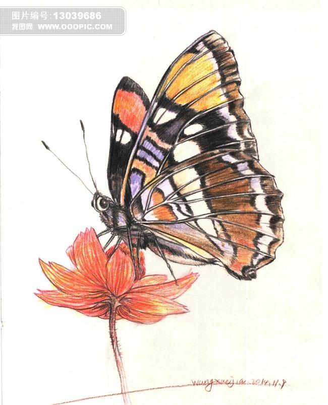 彩色蝴蝶插画手绘图片