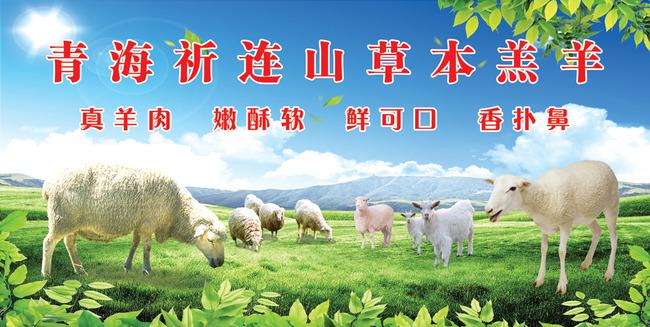 蓝天白云草地羊