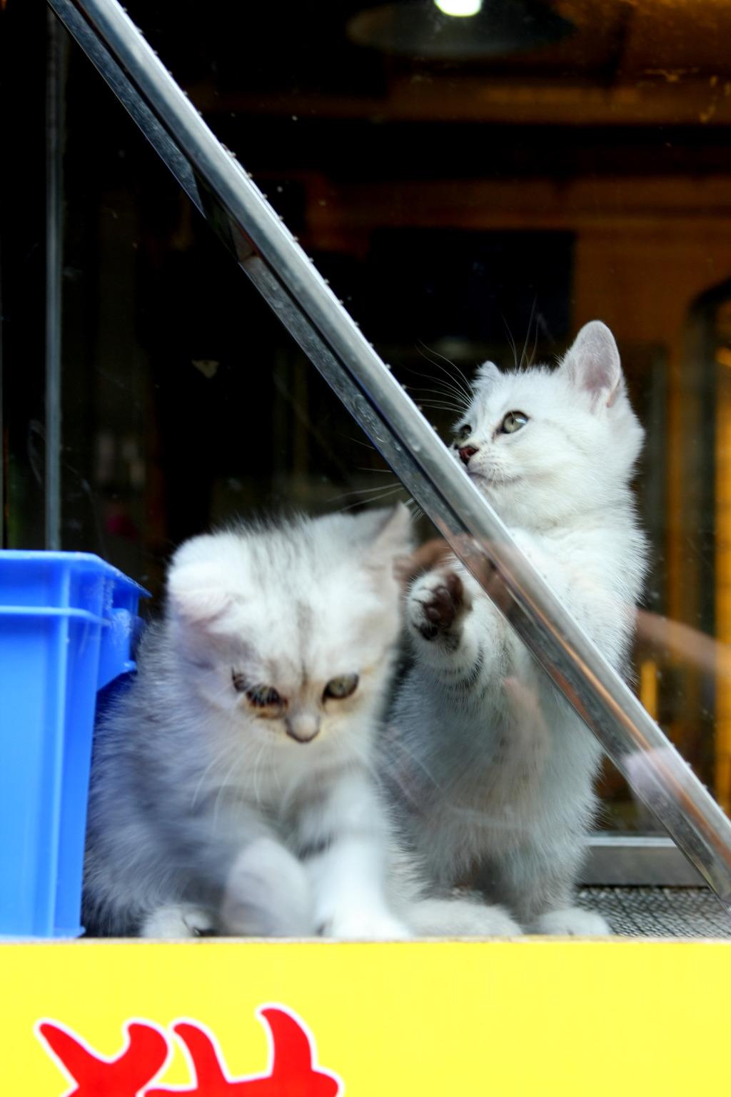 手机锁屏壁纸爱情俩个小猫