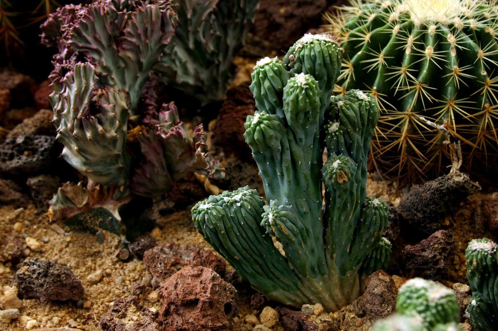 欧克泥手工制作图片大全植物