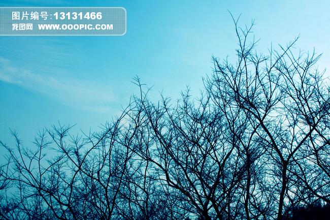树木 枝头 枯树 冬天树木