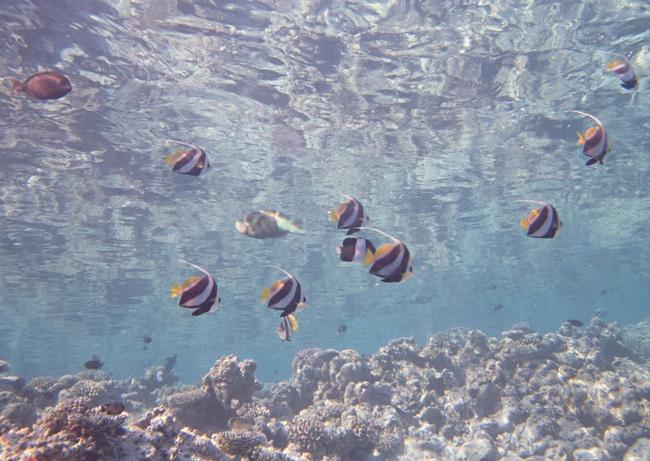 海鱼水产水底海洋生物深海动物