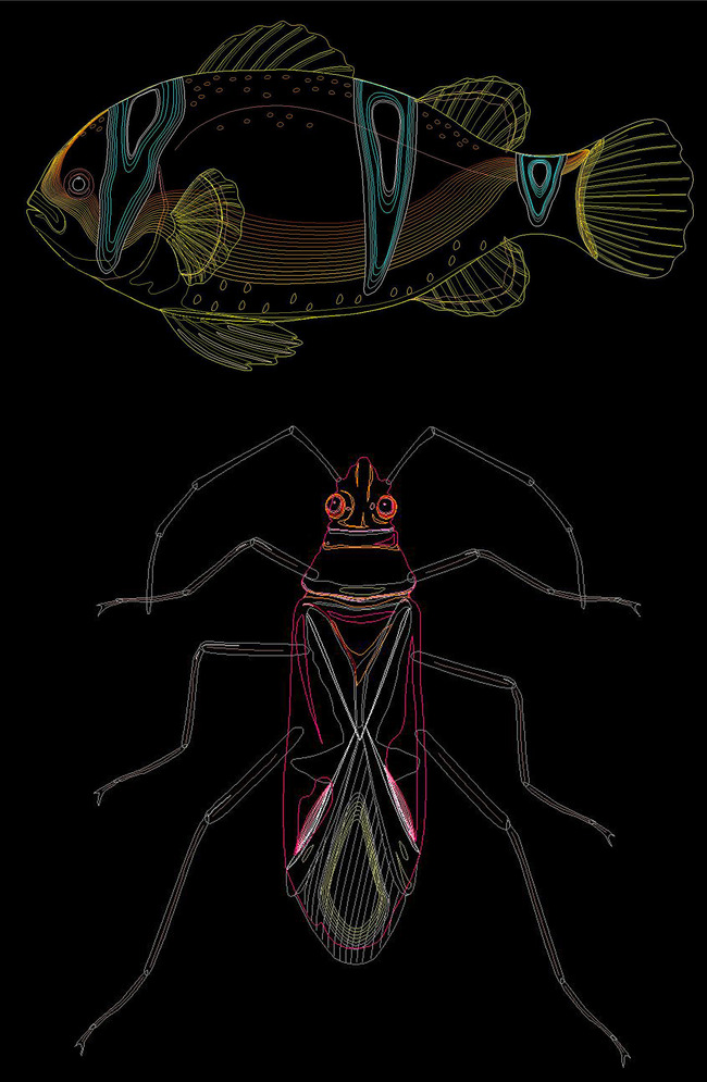 cad图库 室内设计cad图库 cad图纸 > cad动物类昆虫图集鱼蝗虫蝎子
