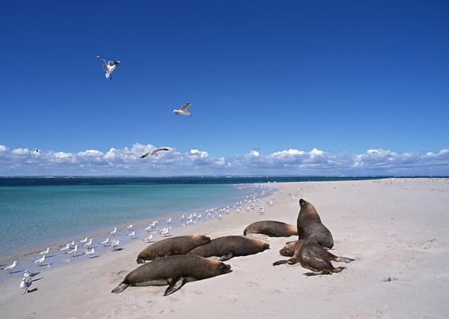 海狮海豹动物世界海洋生物摄影