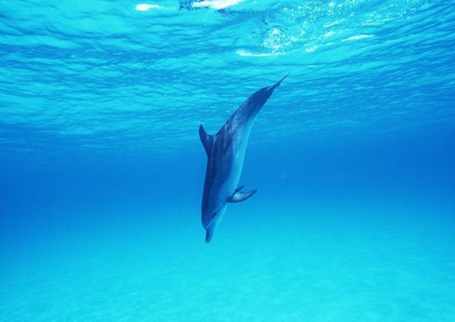 海豚海洋生物大海动物世界素材