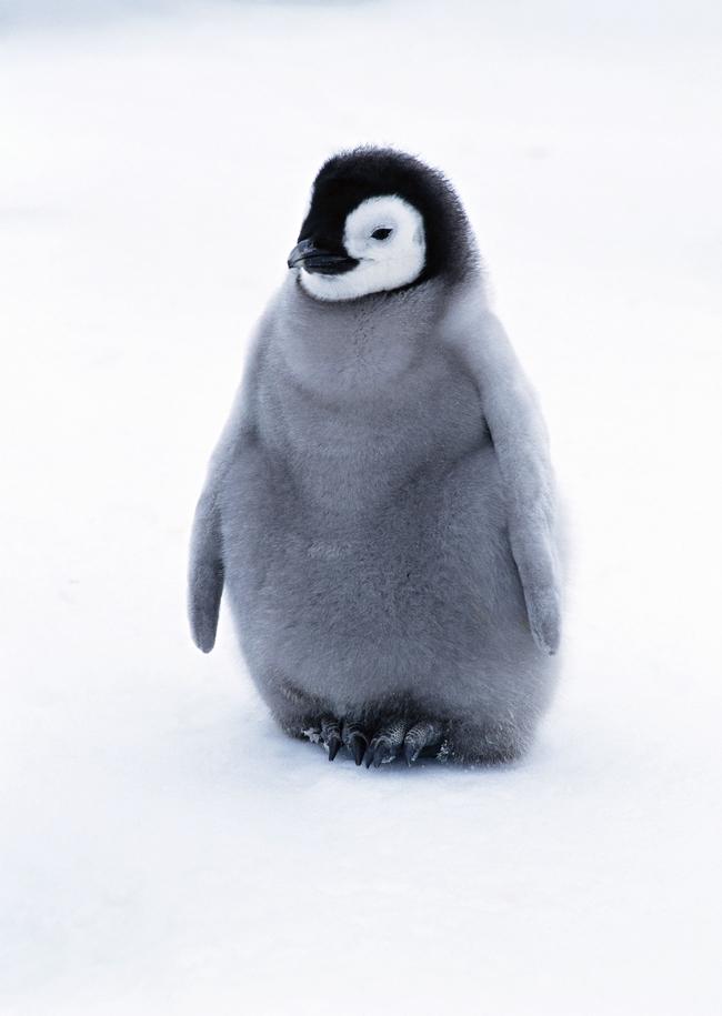 南极企鹅雪地海洋生物动物世界