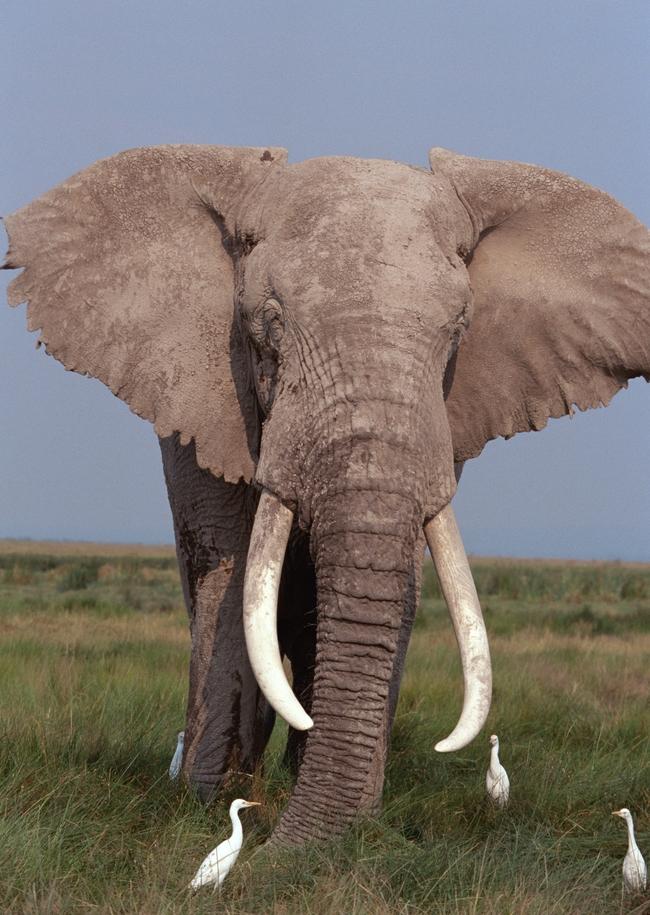 大象野生动物野外风景素材世界