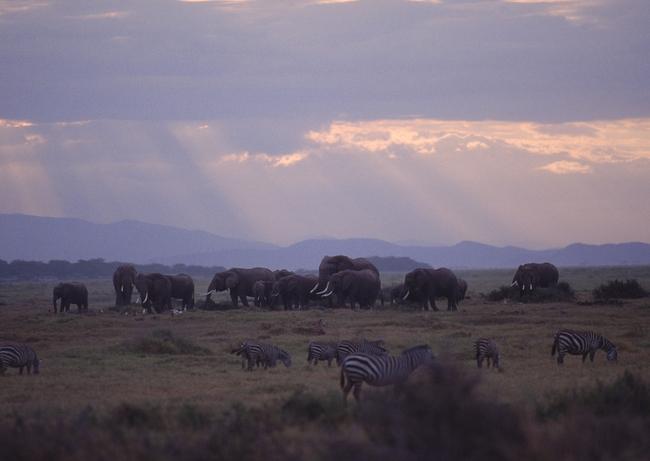 保护动物 野生 草原 凶猛 捕食 野外生存 地球物种 自然世界 动物园