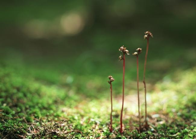 绿色背景 生机 发芽 树枝 树木背景 茶叶 花木 植物 叶脉 野草 花草