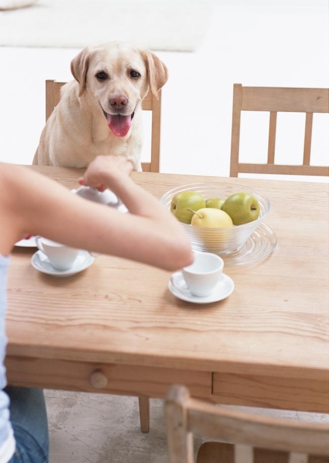 女人和狗女孩生活照爱心养狗