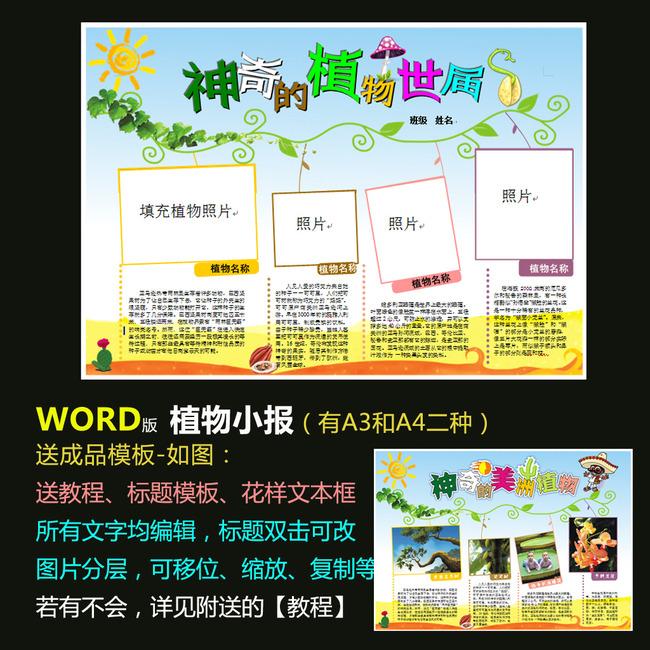 平面设计 其他 小报|手抄报 > word植物电子小报模板神奇的植物世界