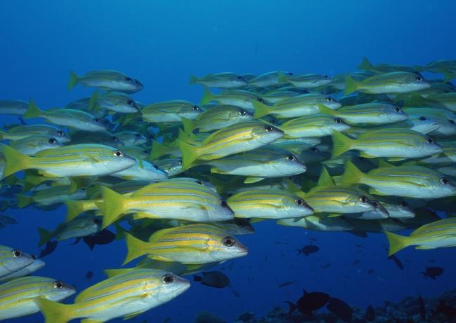 海底世界海洋生物深海探索摄影