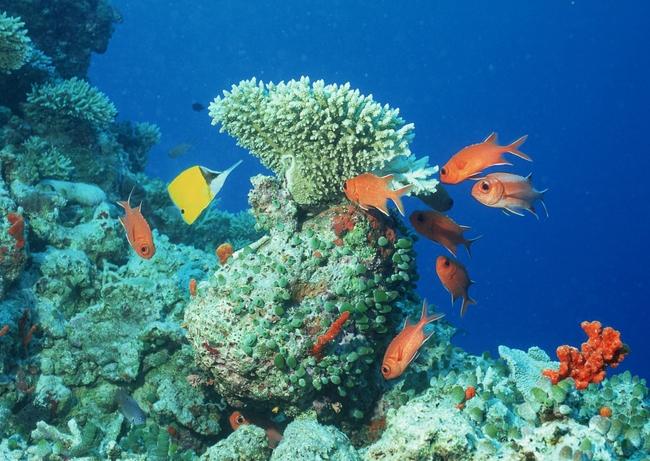 海洋生物深海探索海底世界摄影