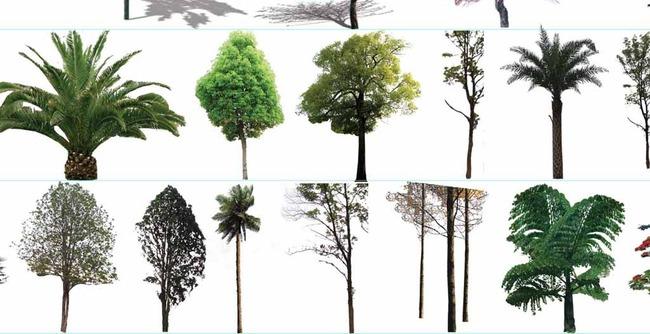 202种室外景观植物高清素材下载