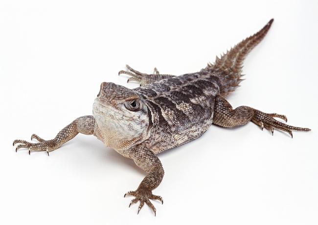 爬行动物世界特写地球生物摄影