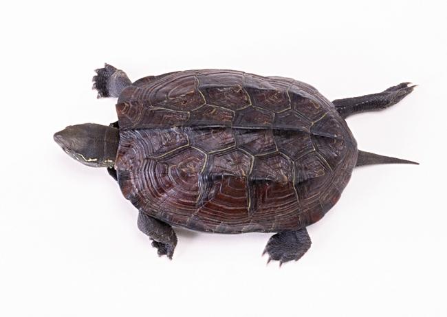 乌龟动物世界特写地球生物摄影