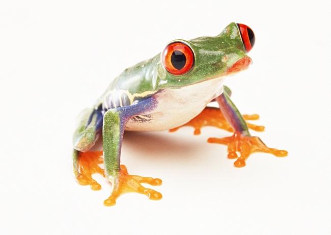 青蛙动物世界高清动物特写摄影