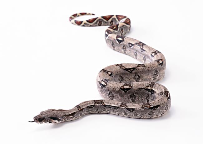 毒蛇动物世界高清动物特写摄影