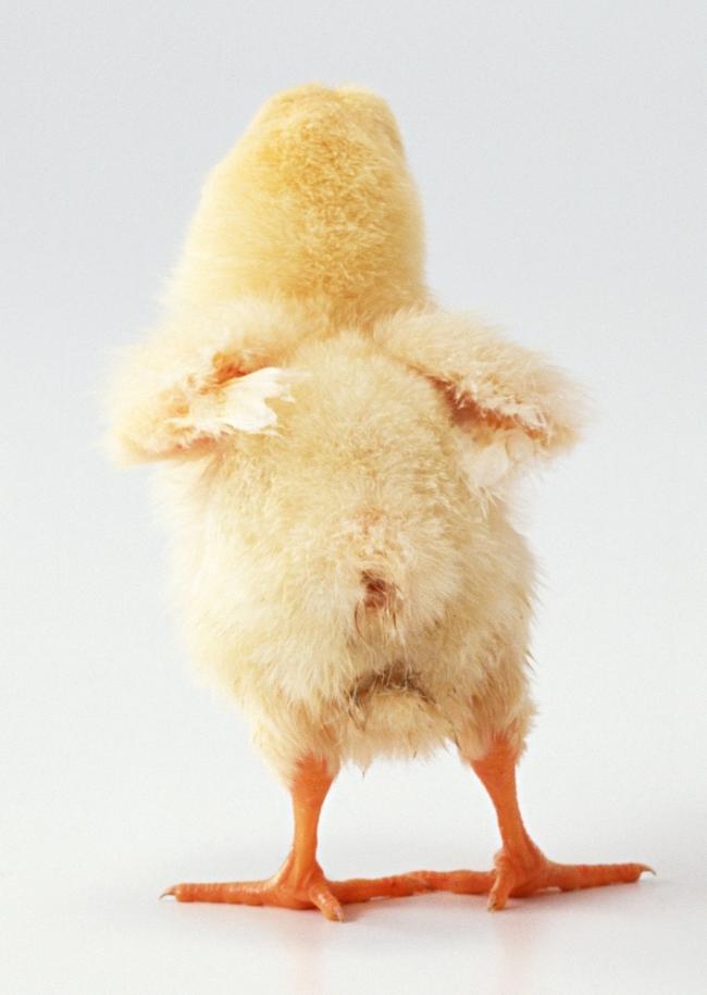 种类 动物世界 鸟类图片 生物界 飞鸟 飞翔 家禽 飞禽 卵生动物 野味