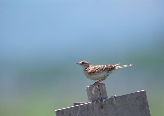 飞鸟 飞翔 飞禽 卵生动物 自然世界 生物 珍稀物种 动物园 保护动物