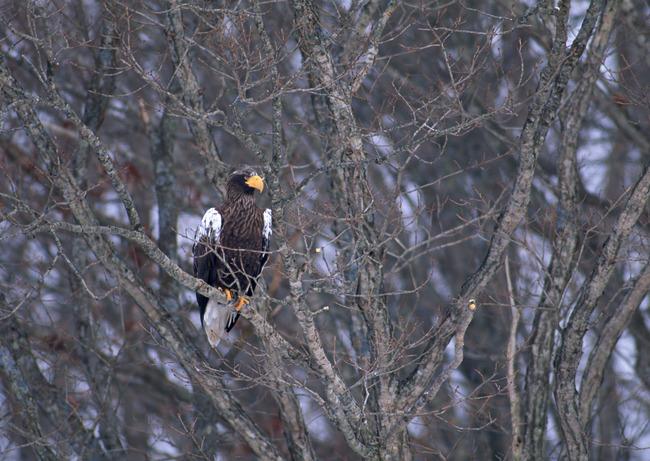 珍稀物种 动物园 保护动物 禽鸟 动物世界 花草 野生动物 鸟群 鸟类