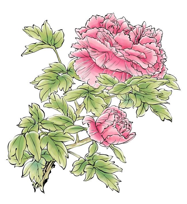植物组合平面手绘