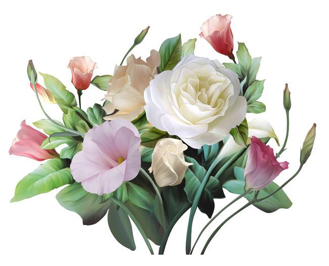 精美高清手绘花卉