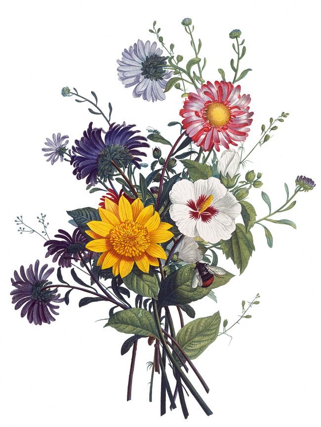 精美手绘彩绘高清花卉图片下载 花花纹花卉图案欧式绿叶 花草 绘画