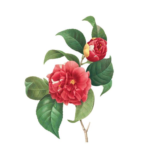 精美复古手绘花卉图案