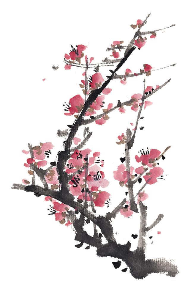手绘花卉一般用什么笔黑白花卉用针管笔,彩色花卉用水彩或者彩铅笔